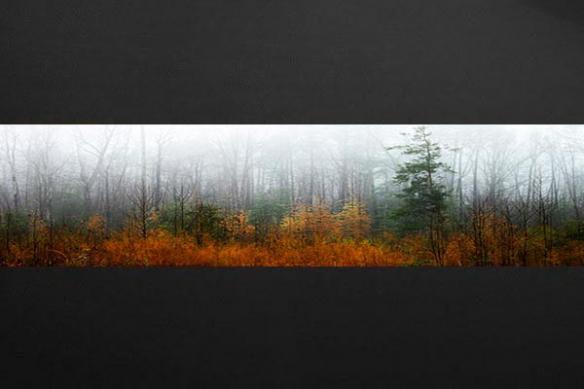 fise murale xxl Forêt Automnale