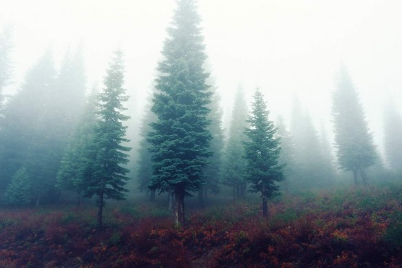 Déco nature forêt Matinée Automnale