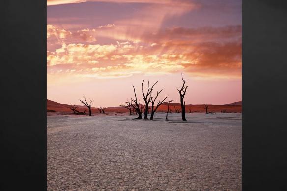 Chouché de soleil désert