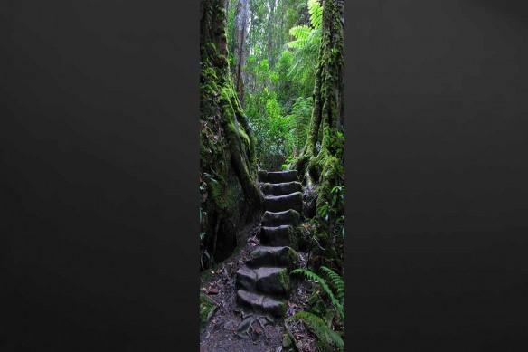 jungle décoration trompe oeil