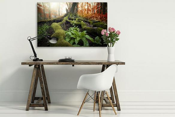 tableau zen racines sous bois