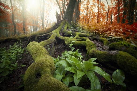 racines sous bois foret primaire