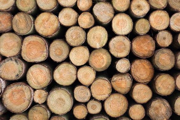 Rondins de bois deco mur