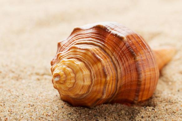 coquillage sur sable