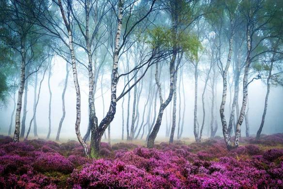 Forêt Romantique