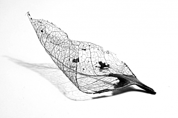 Papier peint noir et blanc feuilles