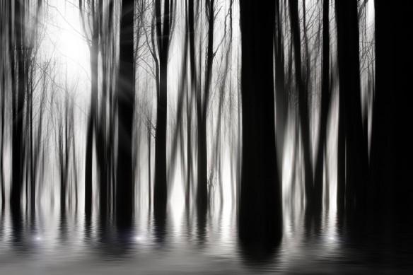 papier peint trompe l'oeil foret mystique