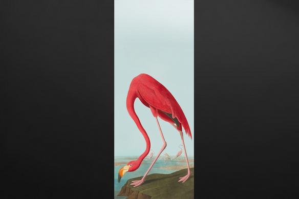 Poster géant Flamant rose Zoologique