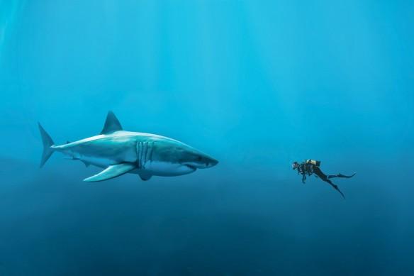 Tableau contemporain Rencontre avec un requin