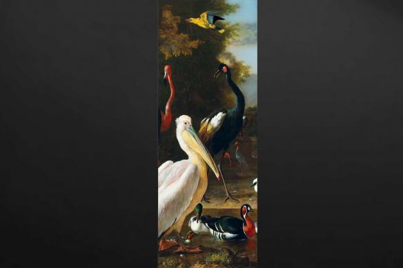 Papier peint Pelican