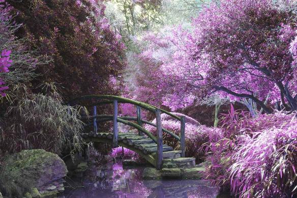 Tableau violet Jardin d'Eden