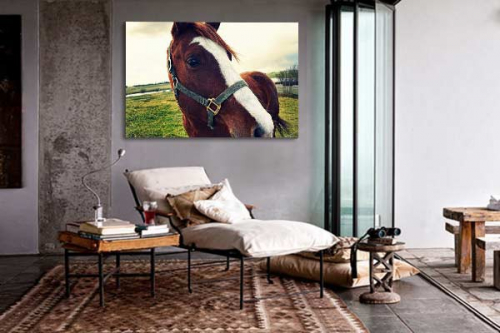 tableau d coratif regard de cheval izoa. Black Bedroom Furniture Sets. Home Design Ideas