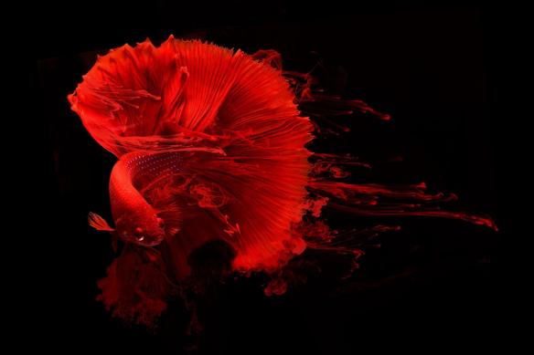 Tableau contemporain poisson encre rouge