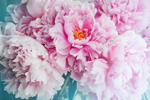 Papier peint décoration fleur Déclaration