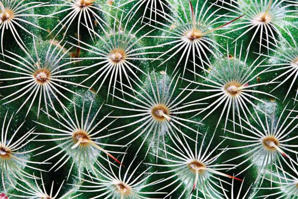 Toile moderne Cactus macro