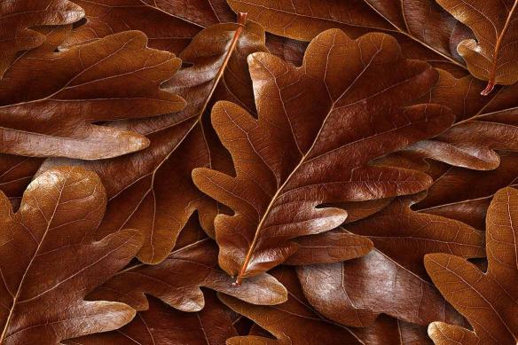 trompe l'œil Feuilles chênes marron