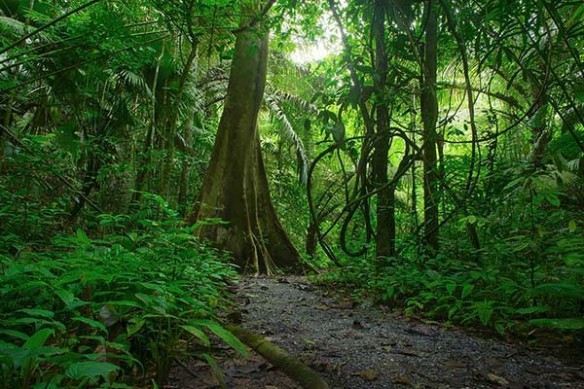 Poster mural Jungle Amazonie