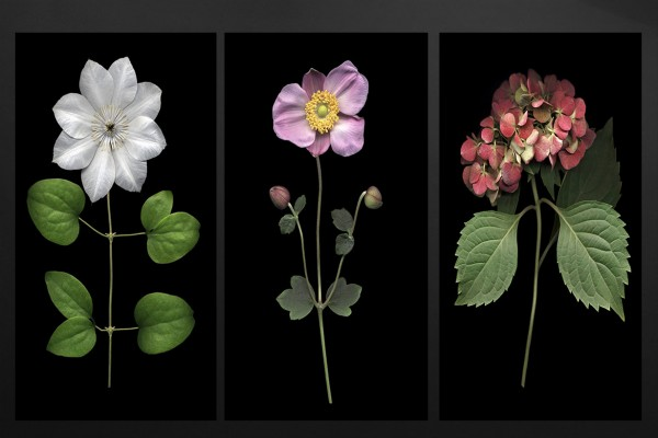tableaux triptyque de fleurs d coration naturaliste. Black Bedroom Furniture Sets. Home Design Ideas
