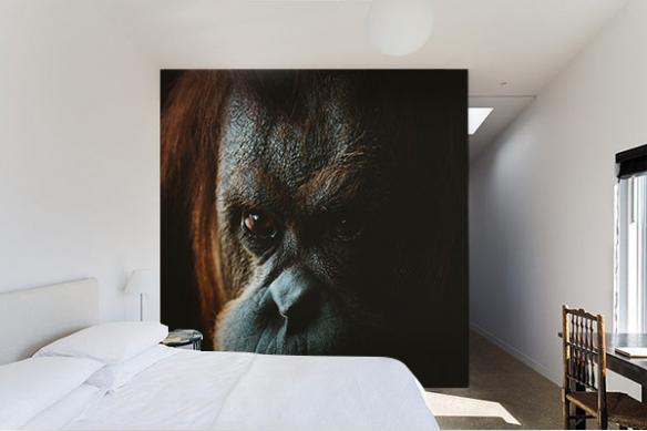 tapisserie chambre Orang Outan