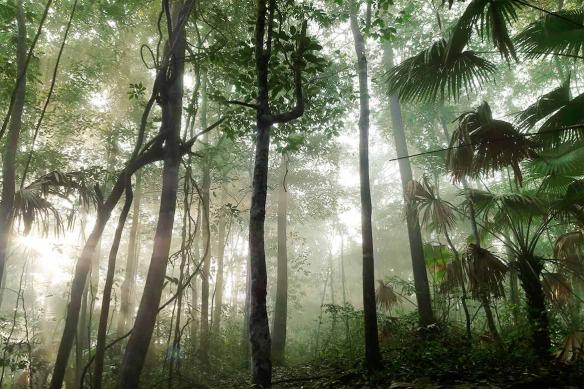 Poster mural Jungle rayon de soleil