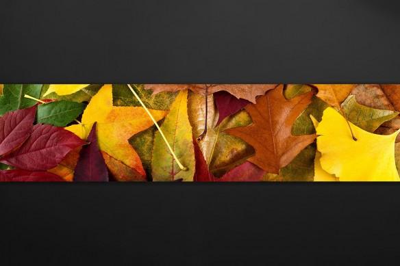 Crédence cuisine originale Feuilles automne