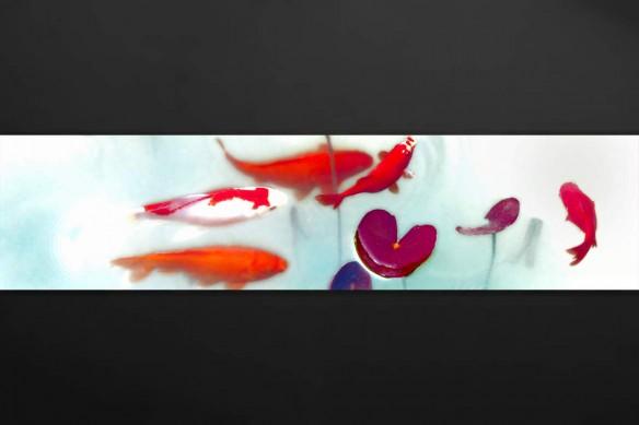 Bassin Aquatique carpes rouges blanches japonnaises