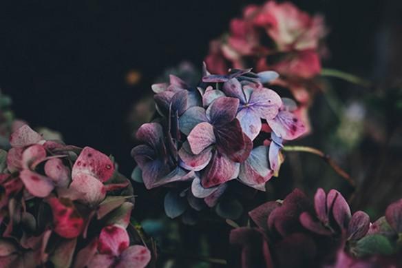 impression sur toile déco fleurs