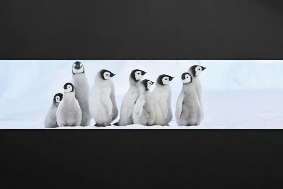 crédence murale Cuisine Pingouins
