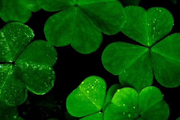 Tableau zen nature Lucky