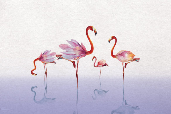papier peint chambre flamants rose violet