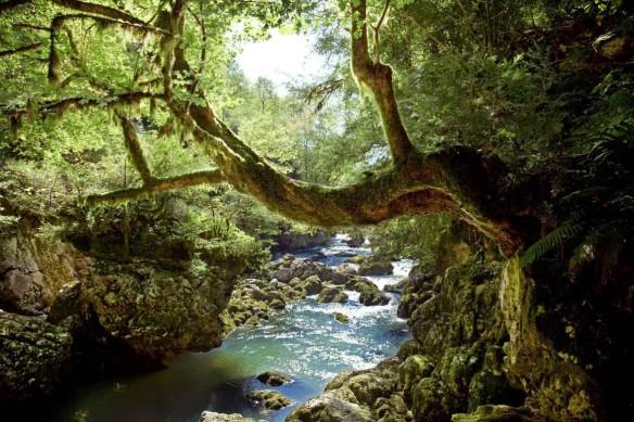 Toile imprimée Jungle rivière