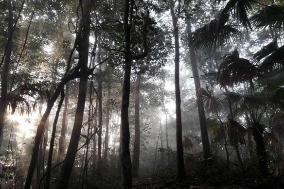 trompe l'oeil moderne Jungle rayon de soleil