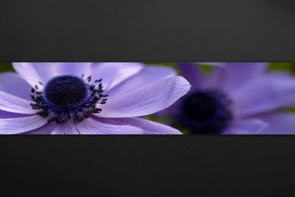Crédence violette fleurs des champs
