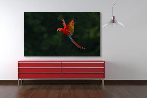 Tableau sur toile perroquet