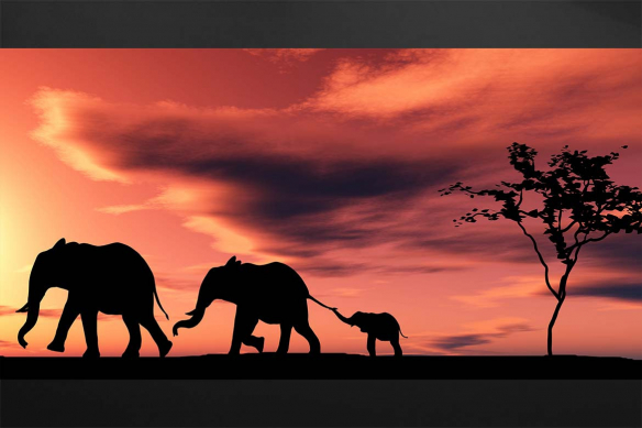 cadre-elephants-troupeau