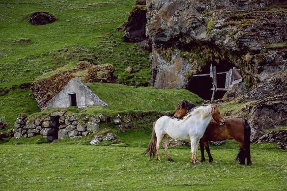 tableau-chevaux-calin