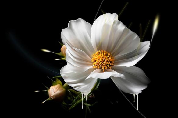 tableau-fleurs-blanches