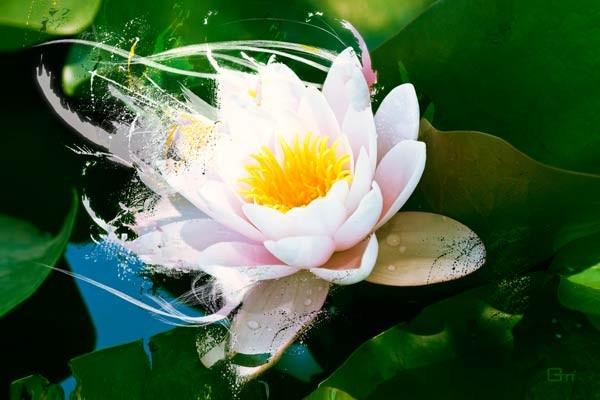 tableau fleur lotus by mathieu gazaix izoa. Black Bedroom Furniture Sets. Home Design Ideas