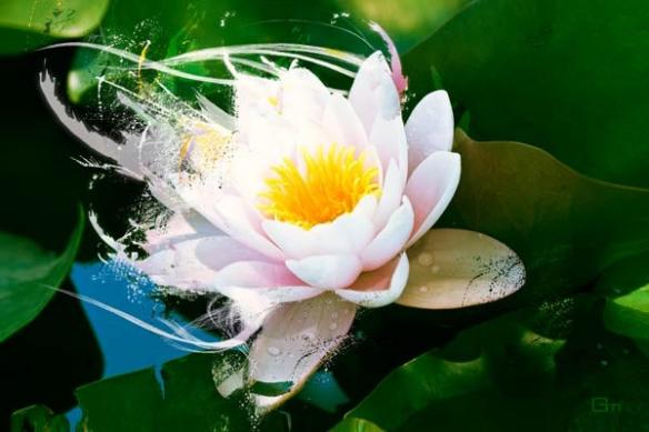 Tableau xxl  fleur zen Lotus
