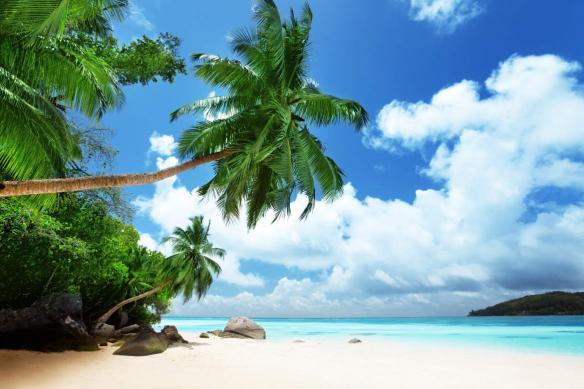 papier peint palmier plage paradis
