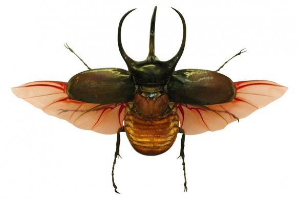 cadre-coleoptere-rouge