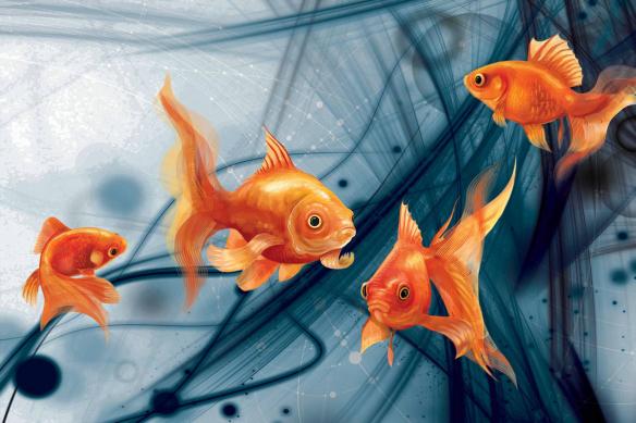 papier peint poissons rouges abstrait