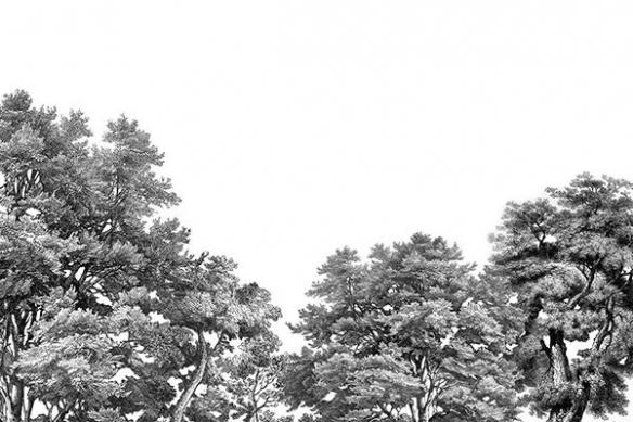 papier-peint-foret-noir-et-blanc