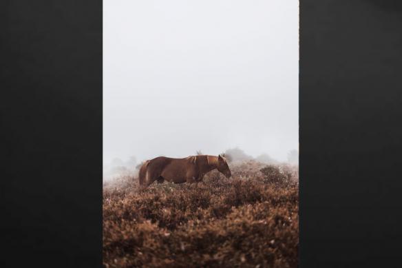 toile imprimée cheval et brousse