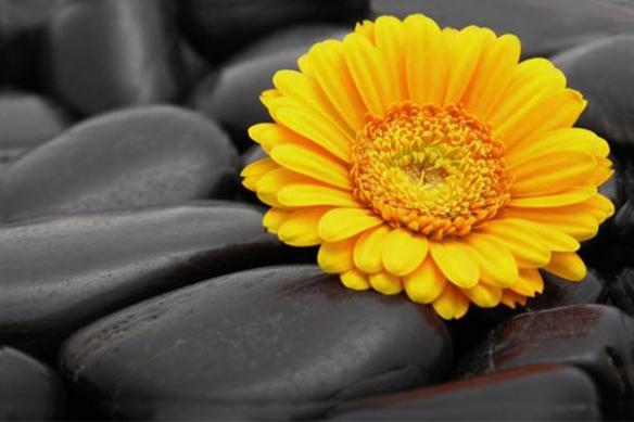 Tableau moderne douce fleur jaune