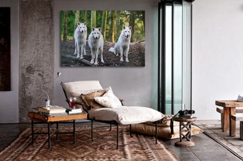 Toile imprimée Meute de loups