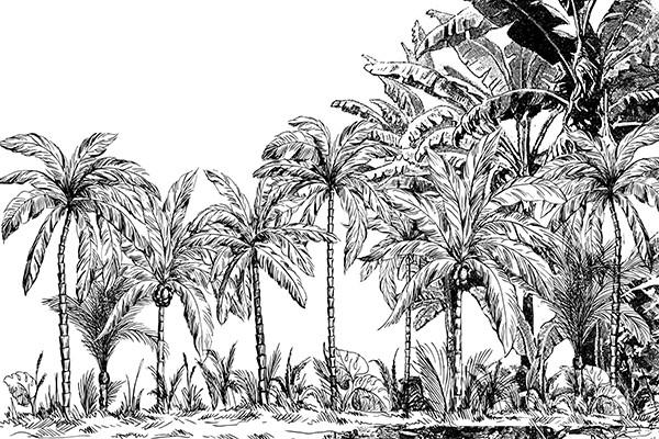 papier peint jungle palmiers noir et blanc. Black Bedroom Furniture Sets. Home Design Ideas