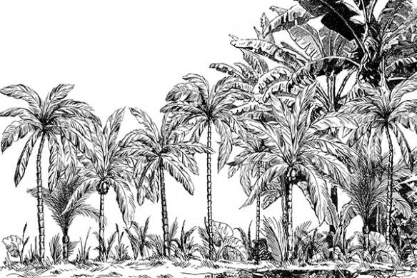 Papier peint haut de gamme jungle Palmiers noir et blanc