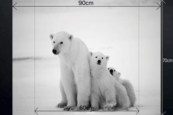 Fond de hotte déco Ours polaires