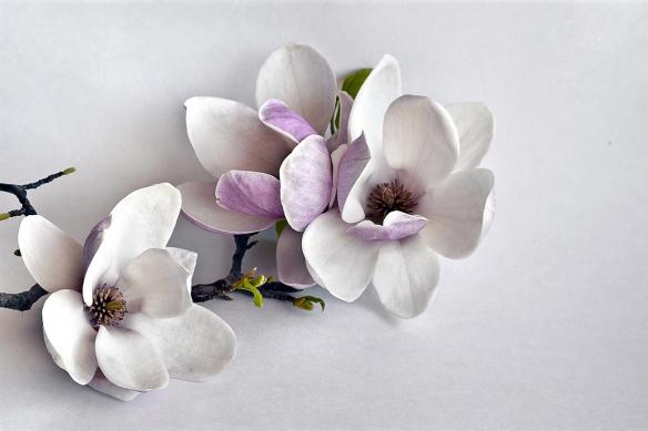 tapisserie fleur magnolia
